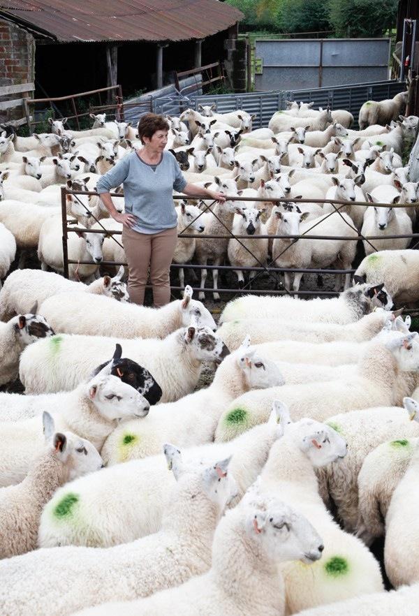 Menalls Farm